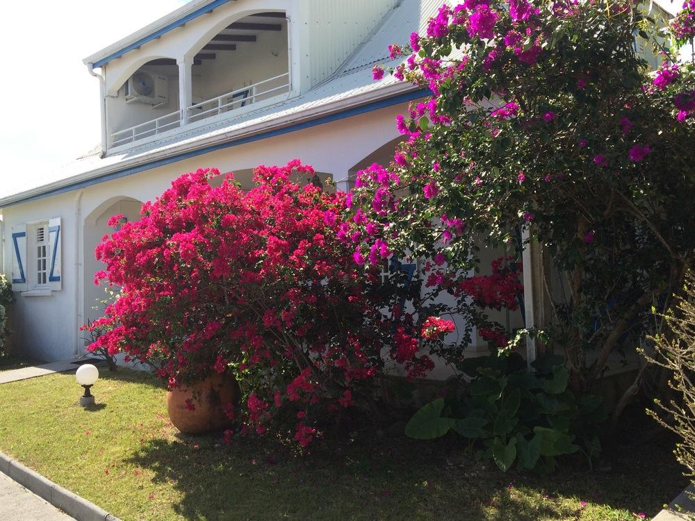 location villa guadeloupe 4